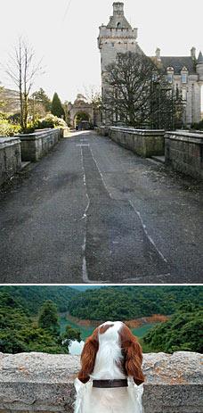 overtoun bridge cani suicidi si buttano dal ponte