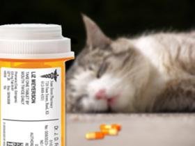 suicidi animali gatto suicida overdose di pillole